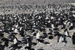 Antarctica photos 2 476
